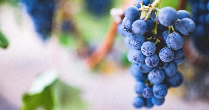 Buah Anggur Spanyol - 9 Jenis Kuliner Khas Tahun Baru di Berbagai Negara