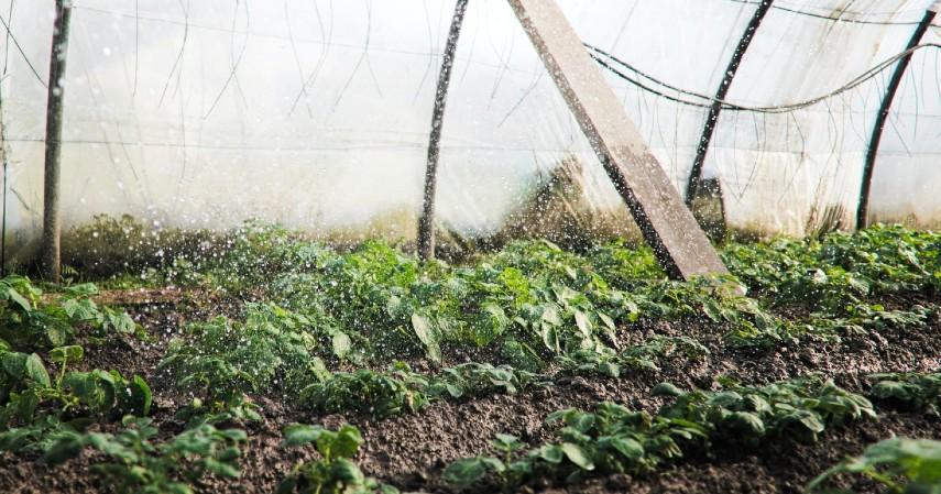 Cara Membuang Minyak Goreng Bekas - Digunakan untuk Membunuh Serangga