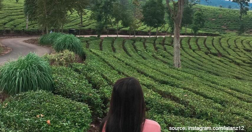 Ciater Tea Mountain Subang - 5 Alternatif Agrowisata Saat Liburan Akhir Tahun 2020