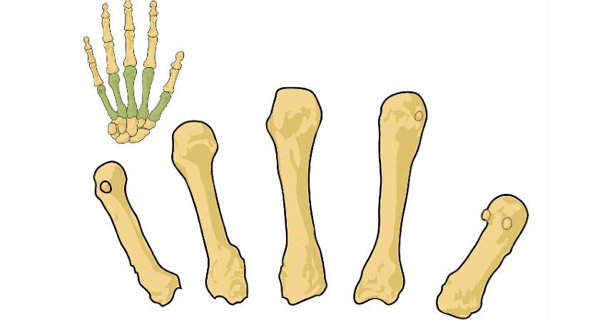 Mencegah Osteoporosis - 11 Manfaat Buah Pir yang Sangat Baik Bagi Kesehatan Tubuh