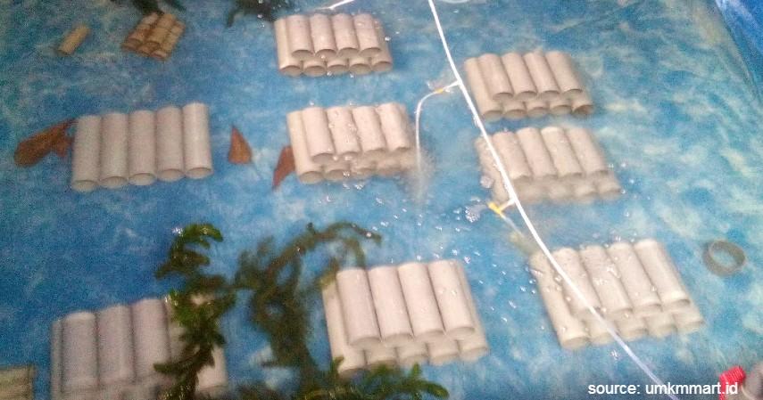 Menyiapkan Bak atau Kolam Budidaya - 6 Cara Budidaya Lobster Air Tawar dan Laut