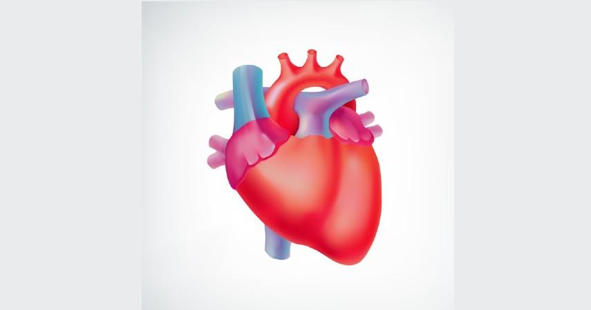 Penyakit yang Diwariskan Orang Tua ke Anak - Kelainan Jantung