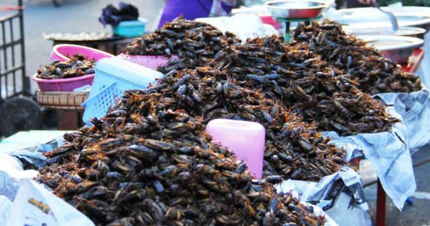 Usaha ternak kecoa Madagaskar - 4 Peluang Usaha Ternak Serangga Omzetnya Bikin Ngiler