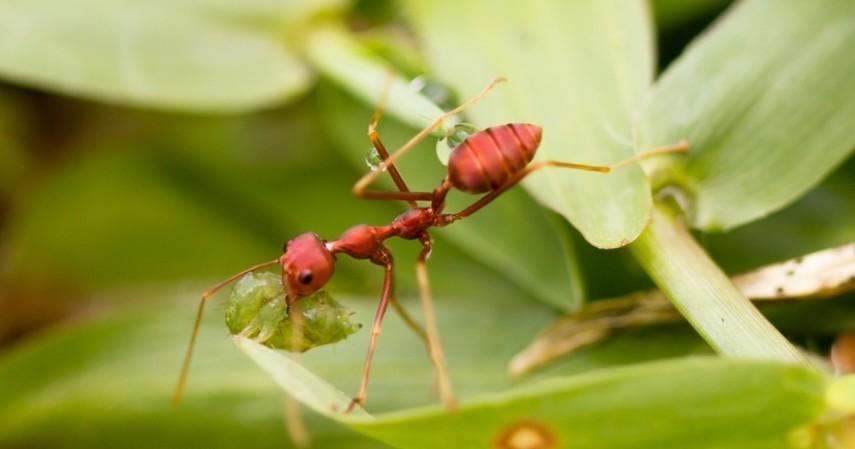 Usaha ternak semut rangrang - 4 Peluang Usaha Ternak Serangga Omzetnya Bikin Ngiler