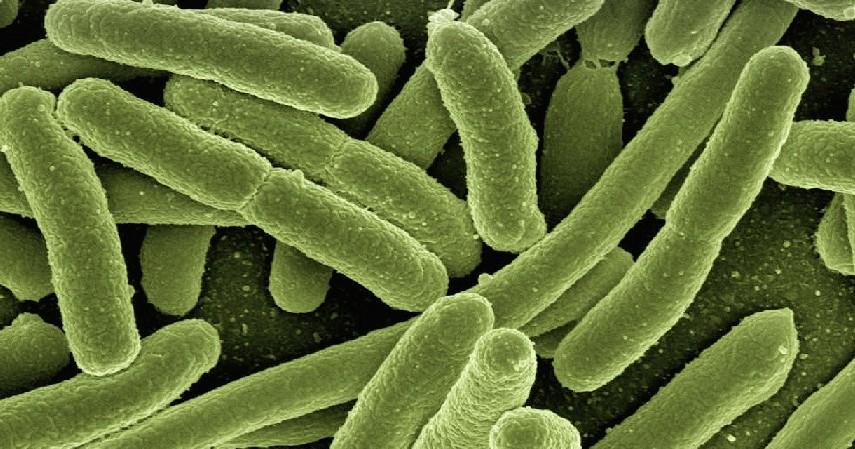 Penuhi asupan probiotik