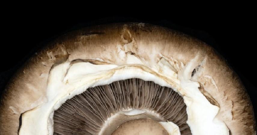Jenis Jamur yang Bisa Dimakan, Aman dan Tinggi Protein - Jamur Portobello.jpg