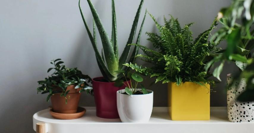 9 Peluang Usaha Pertanian, Minim Modal Hasil Maksimal - Jual Tanaman Hias