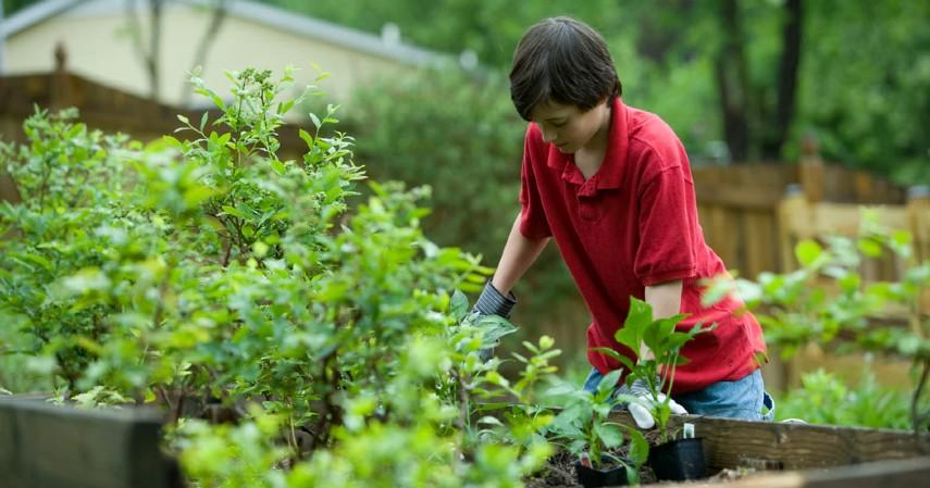 9 Peluang Usaha Pertanian, Minim Modal Hasil Maksimal - Jual Sayur Buah Organik.jpg