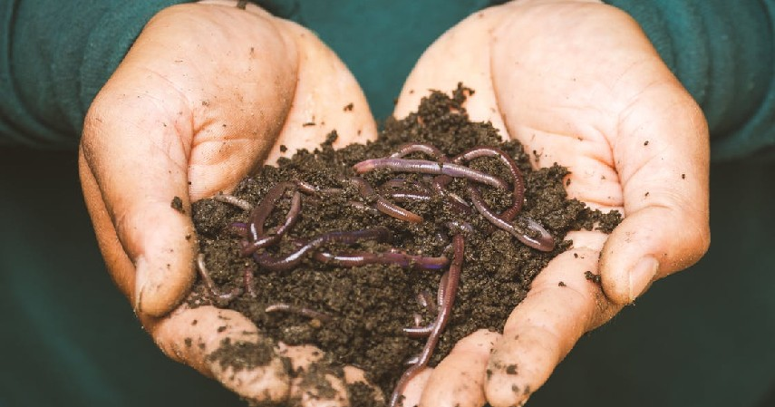 9 Peluang Usaha Pertanian, Minim Modal Hasil Maksimal - Produksi Pupuk Berkualitas