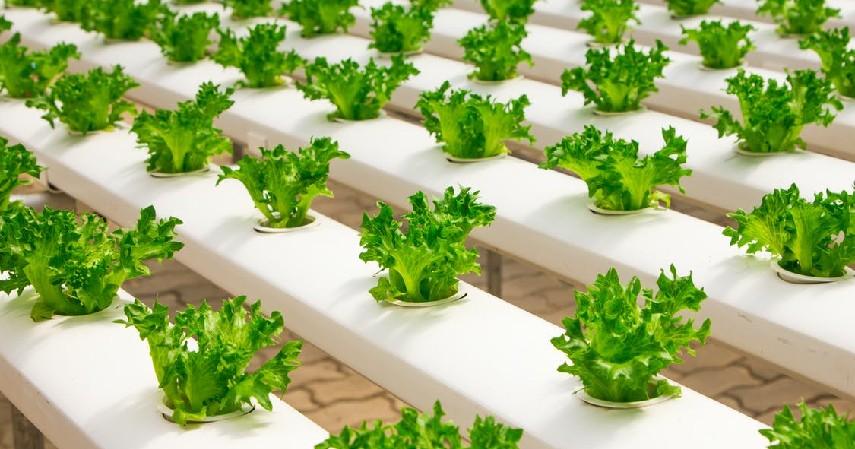 9 Peluang Usaha Pertanian, Minim Modal Hasil Maksimal - Jual Tanaman Hidroponik