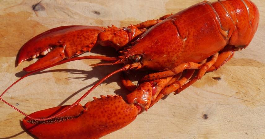 Lobster - Perbedaan Udang dan Lobster Beserta Harga dan Cara Mengolahnya