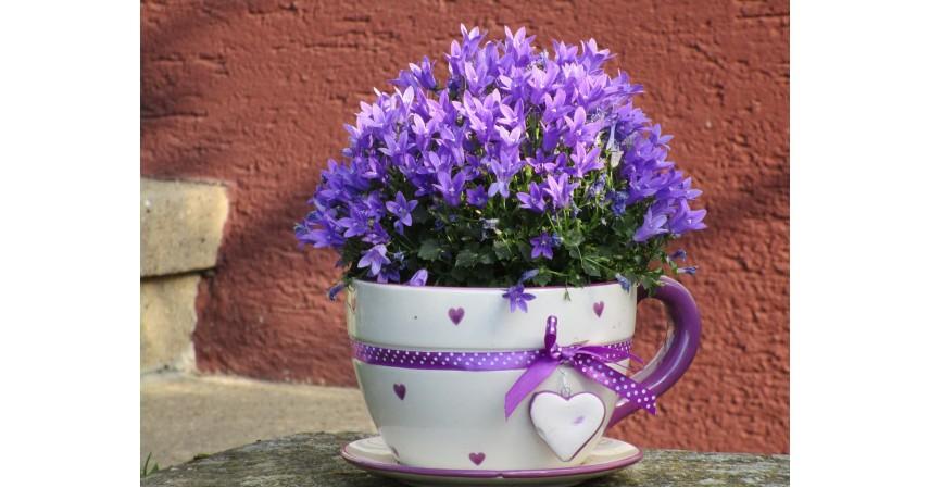 Pot bunga - Kerajinan dari Botol Bekas
