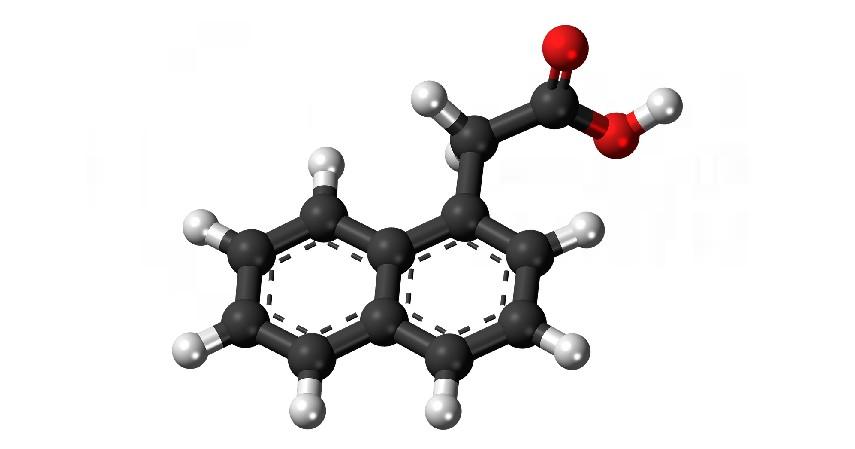 Hormon - Manfaat Ikan Makarel