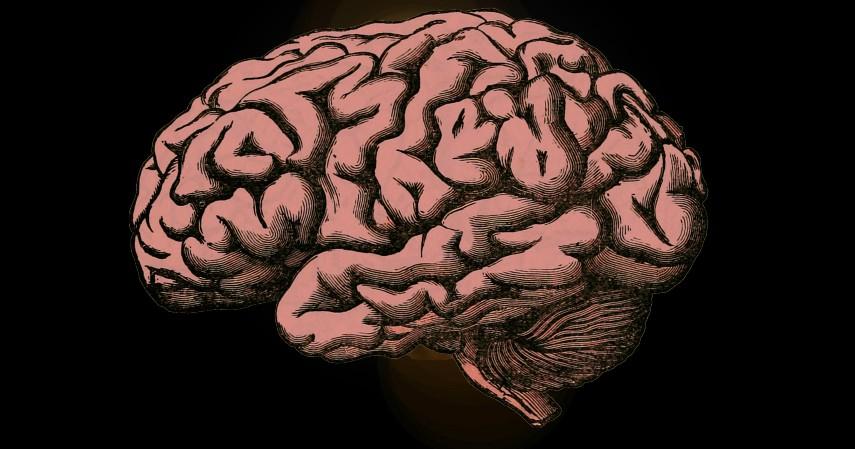 Otak Aktif - Manfaat Bermain Catur Untuk Otak