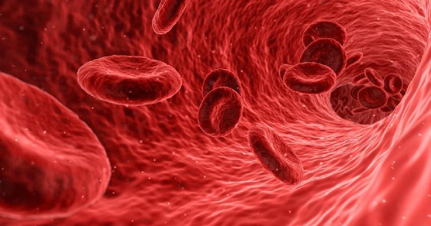 Suplai darah - Penyebab Kram Otot