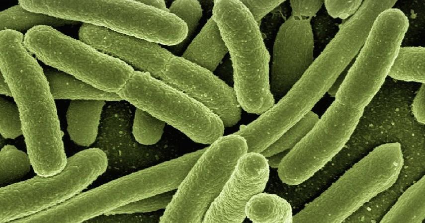 melawan bakteri - Manfaat Menangis bagi Kesehatan