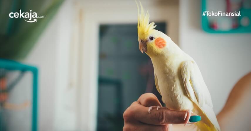 5 Tips Merawat Burung Parkit yang Baik dan Benar, Yuk Simak!