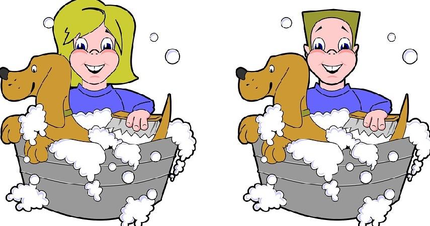 memandikan anjing - Tips Merawat Anjing Samoyed