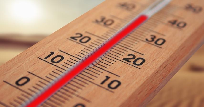 perhatikan suhu - Tips Merawat Anjing Samoyed